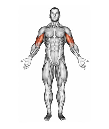 IronmasterUK Biceps