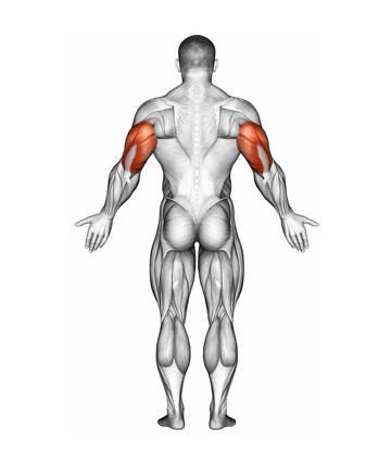 IronmasterUK Triceps